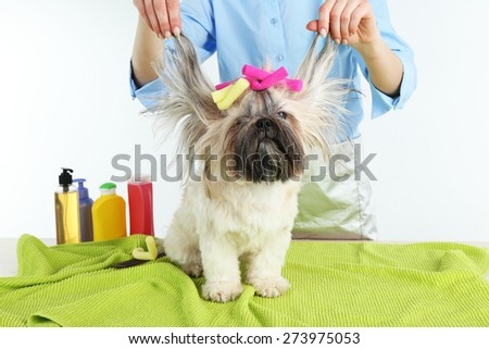 Cute Shih Tzu and hairdresser in barbershop isolated on white - stock photo