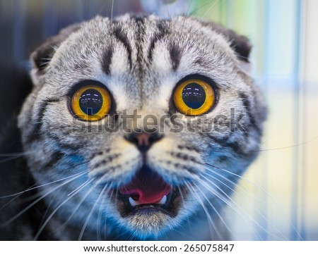 Cute shocked cat - stock photo