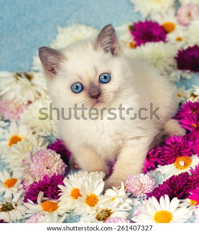 Cute siamese kitten with flowers - stock photo