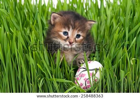 Cute siberian kitten with Easter egg over bright green grass background. Focus on the kitten - stock photo