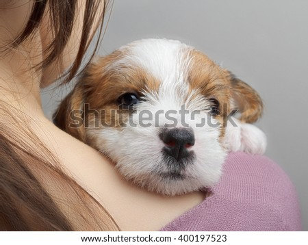 Cute small dog is lying on a human shoulder and looking at camera - stock photo