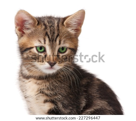 Cute small kitten looks guilty over white background close-up - stock photo