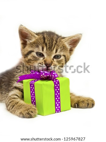 Cute small kitty with green gift box - stock photo