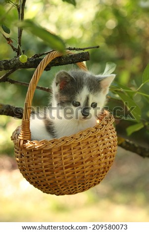 Cute small white and gray kitten resting in the basket in garden - stock photo