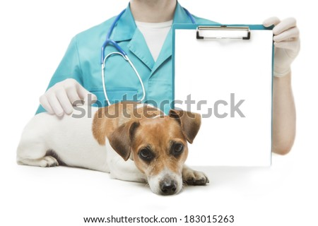 cute smart little dog having rest near veterinarian man who holds office clip blank sheet of paper for your ad Text information. White background. Studio shot - stock photo