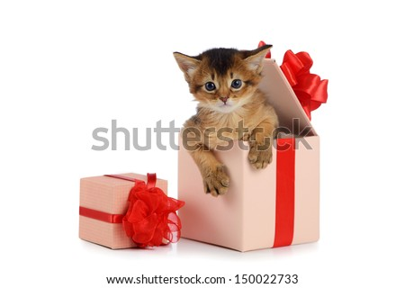 Cute somali kitten in a present box isolated on white background - stock photo