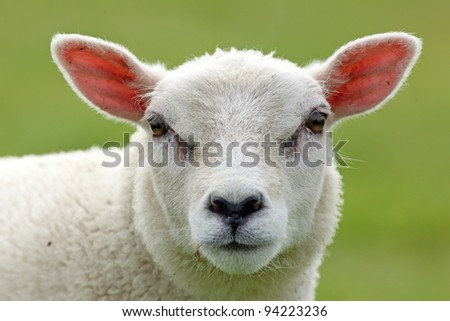 cute spring lamb - stock photo