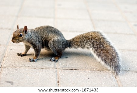 Cute squirrel - stock photo