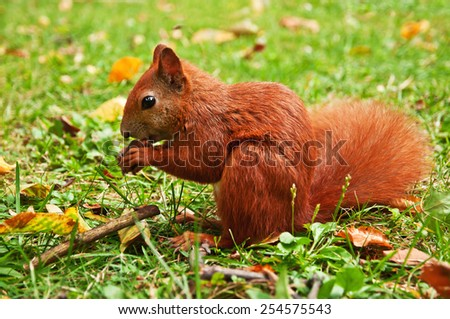cute squirrel holding a nut in his paws - stock photo