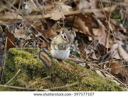 Cute squirrels - stock photo