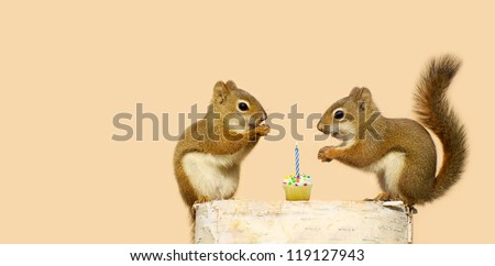 Cute squirrels on a log with the little male giving his sweetheart a birthday cupcake with a candle. Part of a series. - stock photo