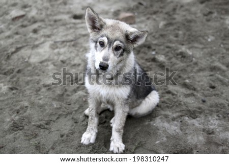 cute  stray dog  on outdoors - stock photo