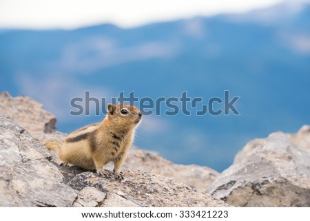 Cute striped chipmunk perched on a rock on top of a mountain in Banff National Park, Alberta Canada - stock photo