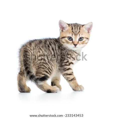 cute striped kitten cat isolated on white - stock photo