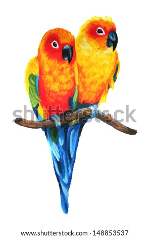 cute Sun Conure or Sun Parakeets isolated on white background, colorful parrot couple perched on branch, bird wildlife image illustrated in hand drawn oil pastel painting - stock photo