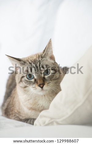 Cute tabby cat at home - laying on sofa and looking wary - stock photo