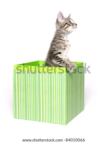 Cute tabby cat sitting inside of green gift basket on white background - stock photo