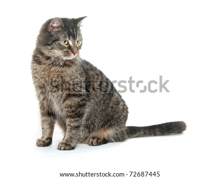 Cute tabby cat sitting on white background - stock photo