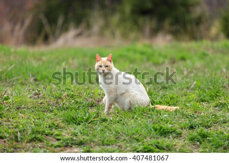 Cute Tabby Gray Cat Kitten Pussycat Sitting In Grass Outdoor In Sunny Summer Evening  - stock photo