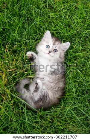 Cute tabby kitten lying on green grass - stock photo