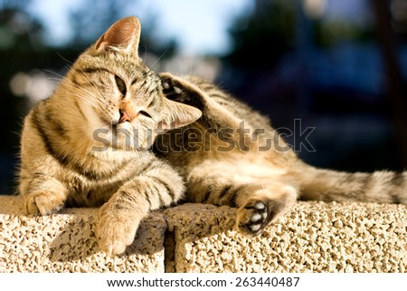 Cute tabby kitten lying on the wall and scratching its head. Selective focus.  - stock photo