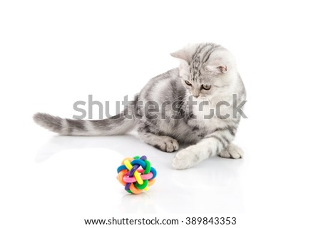 Cute tabby kitten playing toy on white background isolate - stock photo