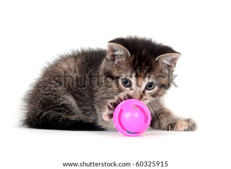 Cute tabby kitten playing with pink toy on white - stock photo