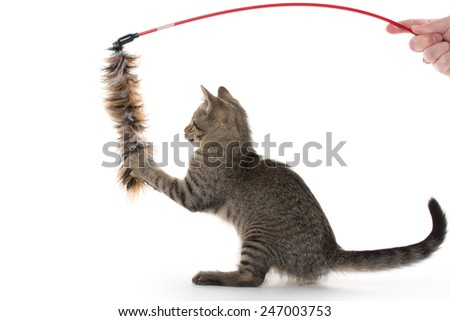 Cute tabby kitten playing with toy on white background - stock photo