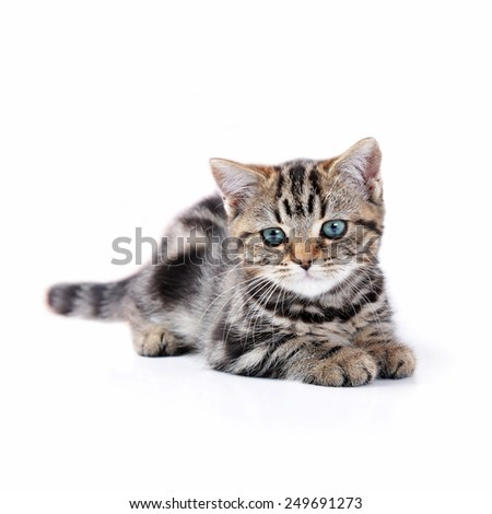 Cute  tabby kitten plays with  ball of yarn - stock photo