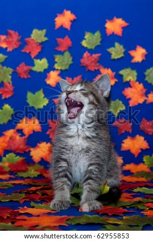 Cute tabby kitten sitting among fall leaves on blue background - stock photo