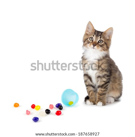 Cute tabby kitten sitting next to jellybeans spilled out of an Easter egg isolated on a white background. - stock photo