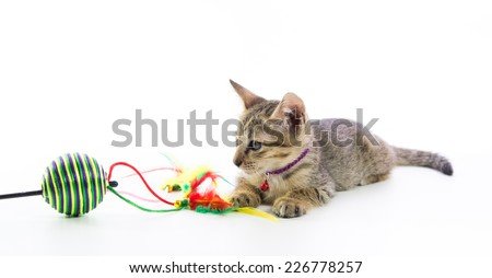 Cute tabby kitten toy play isolated on over white background - stock photo