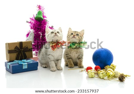 Cute tabby kitten with present onwhite background isolated - stock photo
