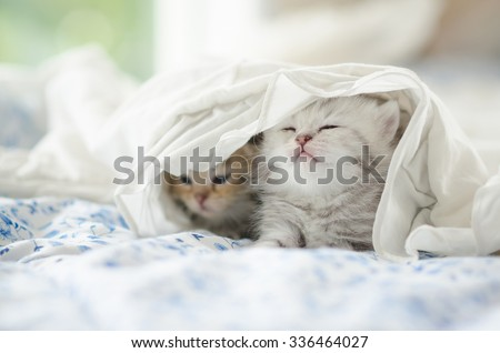 Cute tabby kittens playing under white blanket - stock photo