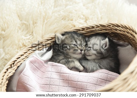 Cute tabby kittens sleeping and hugging in a basket - stock photo