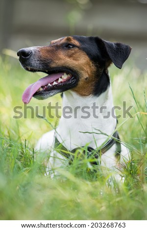 Cute terrier dog lying in grass - stock photo