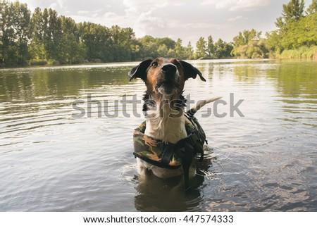cute terrier dog posing in water - stock photo