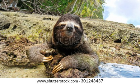 Cute three-toed sloth on the ground of tropical shore in the national park of Cahuita, Costa Rica, Central America - stock photo