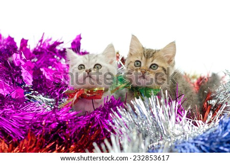Cute  two tabby kitten sitting in colorful tinsel onwhite background - stock photo