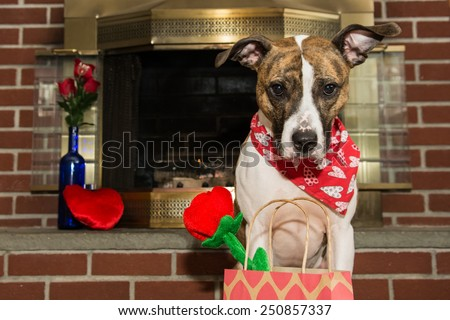 Cute Valentine's Dog - stock photo