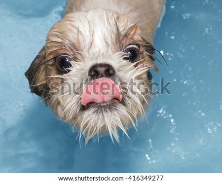 cute wet dog in the bath - stock photo