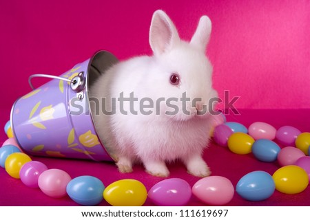 Cute white baby Easter Netherland Dwarf bunny rabbit on hot pink background in purple bucket with string of Easter eggs. - stock photo