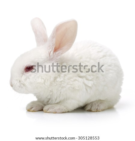 Cute white baby rabbit on white background - stock photo