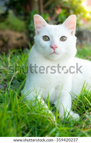 Cute white cat in the green grass - stock photo