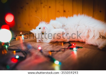 cute white cat lying on wooden floor with interest looking at christmas colorful garland. After the holidays - stock photo