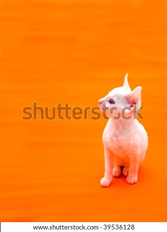 Cute White Kitten on Orange Background - stock photo