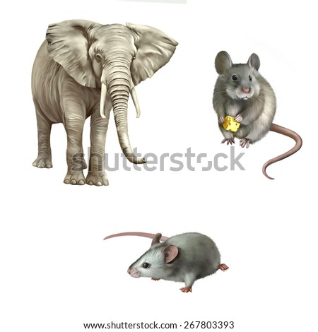 cute white mouse holding cheese, African elephant (Loxodonta africana) on a white background. - stock photo