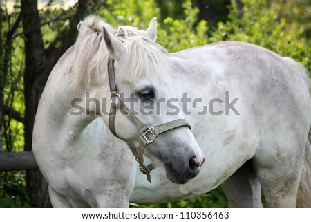 Cute white pony portrait in summer - stock photo