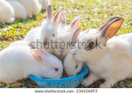Cute White rabbit with enjoy eating at the morning - stock photo