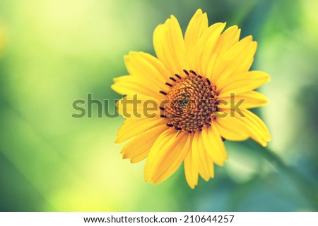 cute yellow summer flower - stock photo
